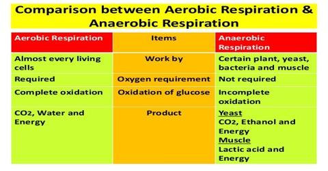 Aerobic-respiration-and-Anaerobic-respiration